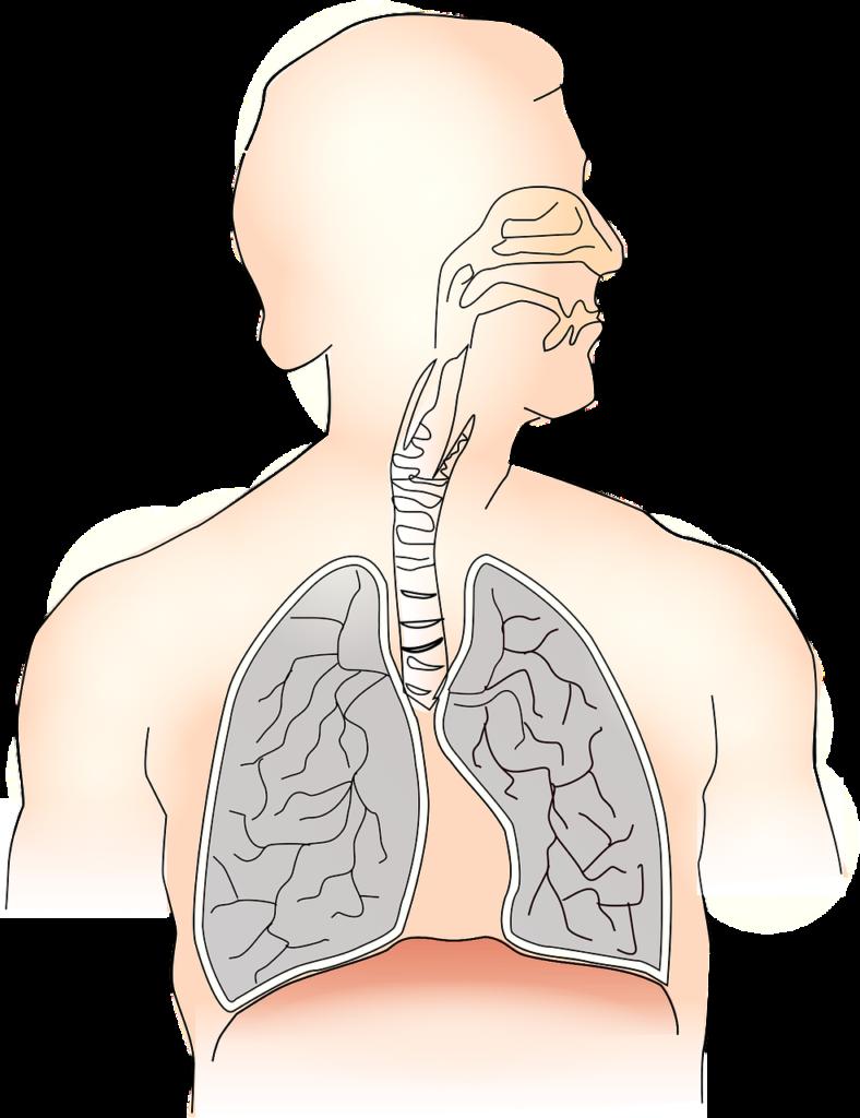 Mal di schiena e Diaframma - Centro di Medicina..