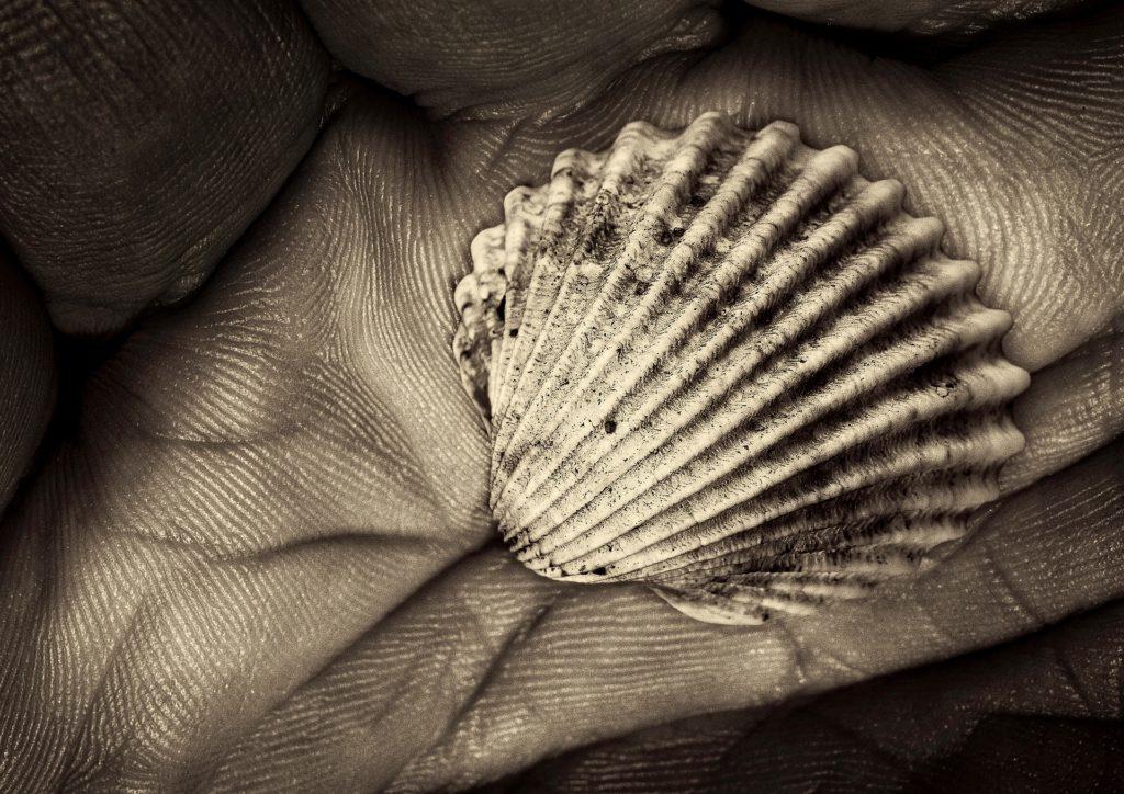 shell-2546312_1920