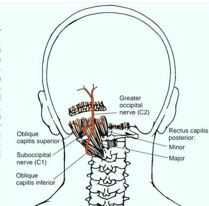 cervicale-osteopatia